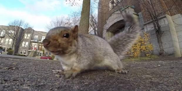 Un écureuil vole une GoPro - La DH