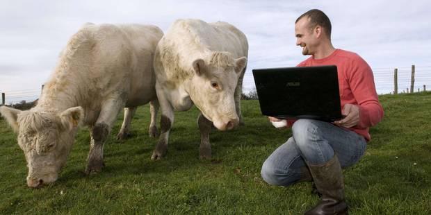 Trouverlebontaureau.com, le site de rencontre pour... vaches - La DH
