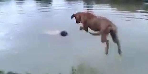 Ce chien sauve son maître de la noyade (Vidéo) - La DH