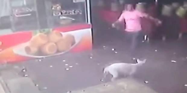 Il tente de frapper un chien et vit un grand moment de solitude - La DH
