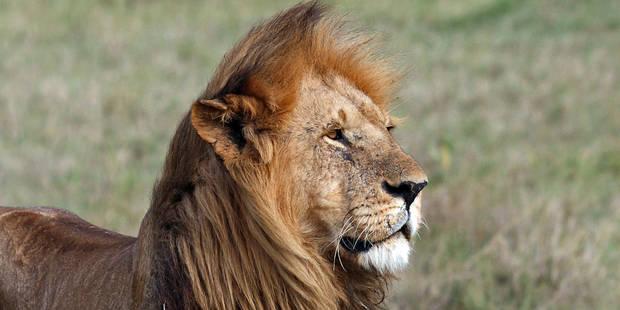 Horrible: elle se fait attaquer par un lion en pleine représentation (VIDEO) - La DH