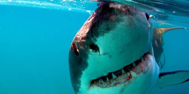 Un Japonais tué par un requin en Australie, les jambes arrachées - La DH