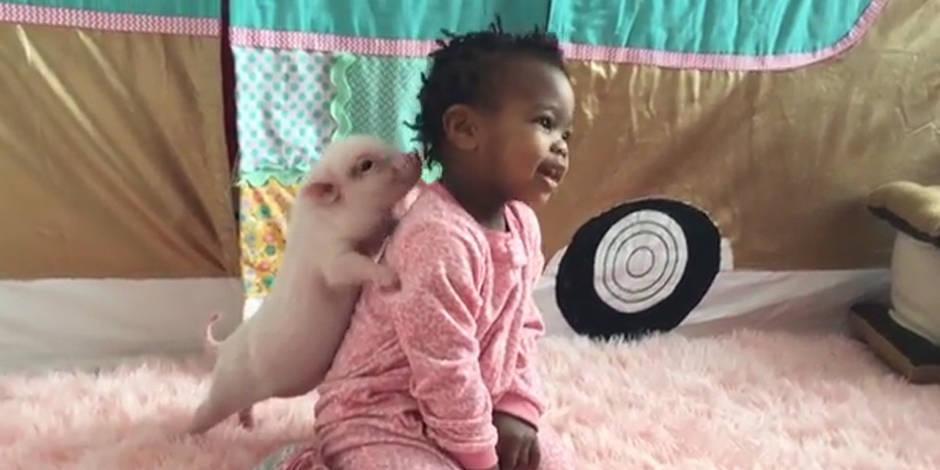 Un petit cochon câline une fillette