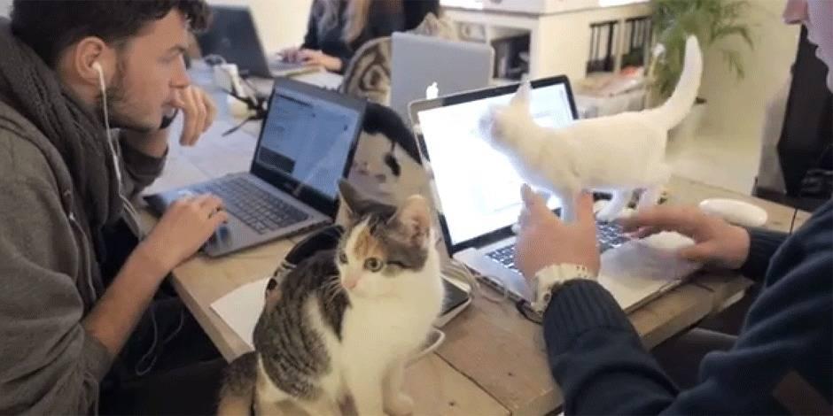 Travailler avec les chats, c'est possible!