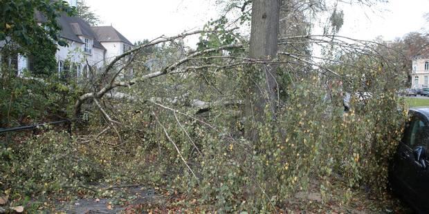 Avis de tempête : la Ville de Tournai conseille de ne pas aller dans les parcs dès ce soir - La DH