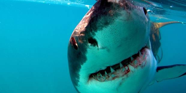 Un adolescent de 13 ans happé par un requin à La Réunion - La DH