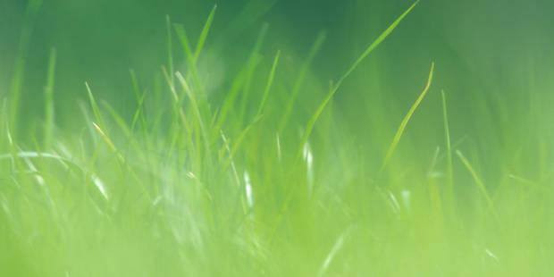 Pouvez-vous tondre votre pelouse le dimanche matin? - La DH