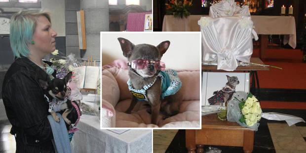 Adieu en grande pompe � Miss Chiwa, c�l�bre chihuahua de Sambreville (PHOTOS)