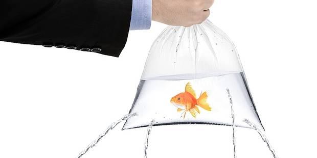 Gagner un poisson rouge la foire c 39 est termin for Acheter poisson rouge liege