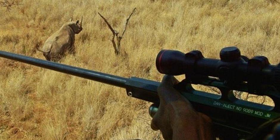 Ce Texan crée un tollé en tuant l'un des rares rhinocéros noirs, pour 350.000 dollars