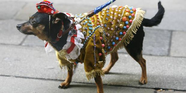 Les animaux ramenés de vacances sont souvent euthanasiés - La DH