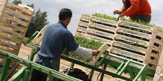 Horticulture: 15.000 saisonniers polonais en Belgique - La DH