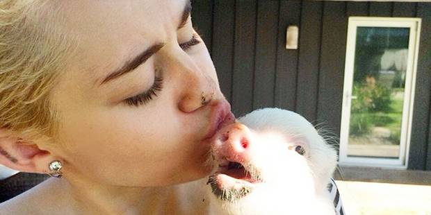 Miley Cyrus, végétarienne la plus sexy de 2015 - La DH