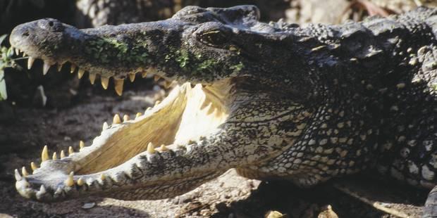 Hermès réagit aux propos de Jane Birkin concernant le traitement des crocodiles - La DH