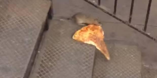 Un rat et son morceau de pizza font le buzz - La DH