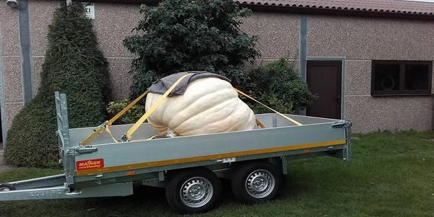 849 kilos! Voici le plus gros potiron de Belgique - La DH