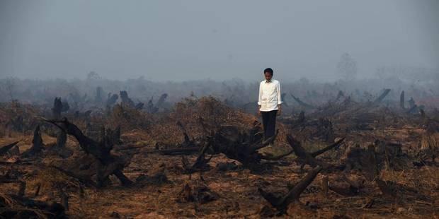 Incendies en Indon�sie: fum�es toxiques jusque sur les plages touristiques de Tha�lande