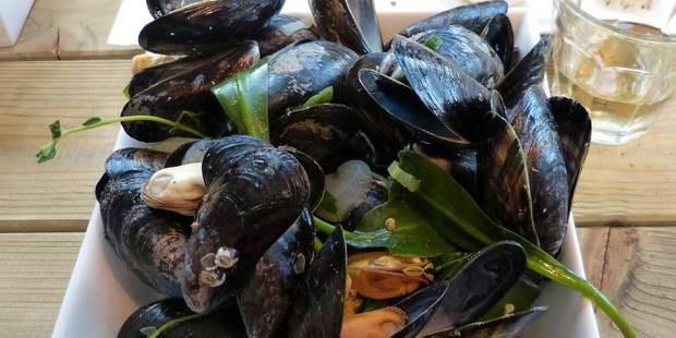 Vingt trucs à savoir sur les moules de Zélande ! - La DH