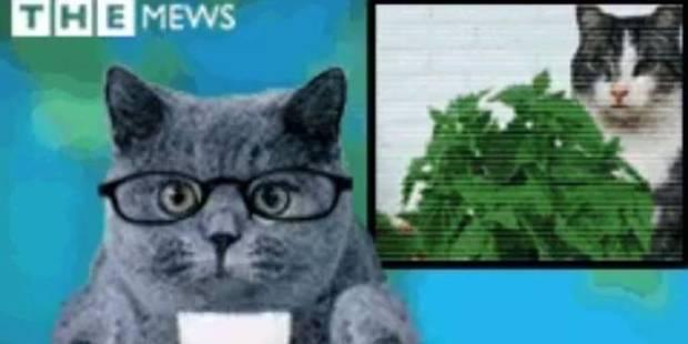 Mais pourquoi le choix des chats dans ce climat anxiogène ? - La DH