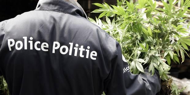 Un éducateur pour jeunes coincé avec plus de 5 kg de cannabis! - La DH