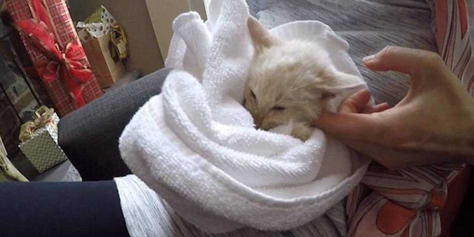 Un chaton enseveli sous la neige revient miraculeusement à la vie