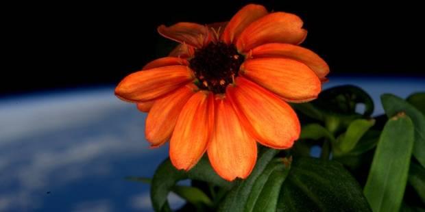 Voici la première fleur cultivée dans l'espace - La DH