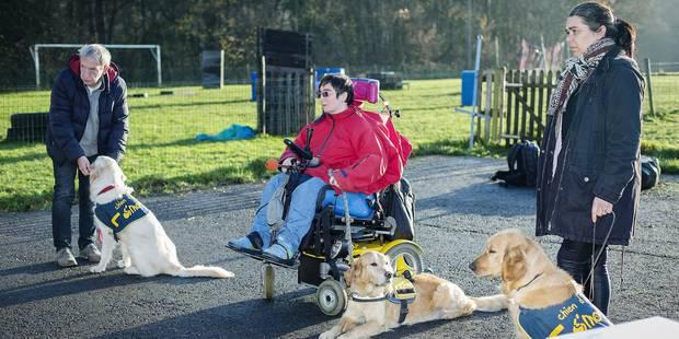 La formation des chiens d'assistance bientôt financée en partie par l'Awiph - La DH