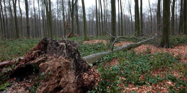 Les parcs bruxellois et la Forêt de Soignes fermés dès dimanche - La DH