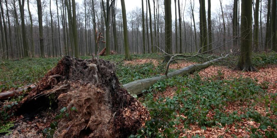 Les parcs bruxellois et la Forêt de Soignes fermés dès dimanche