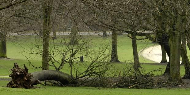 Le Bois de la Cambre finalement rouvert dès samedi matin - La DH