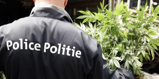 8 interpellations et 910 plants de cannabis découverts dans le Namurois