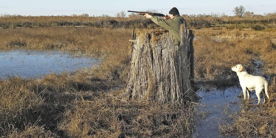 Un homme tire accidentellement sur son fils en chassant les canards à Fleurus