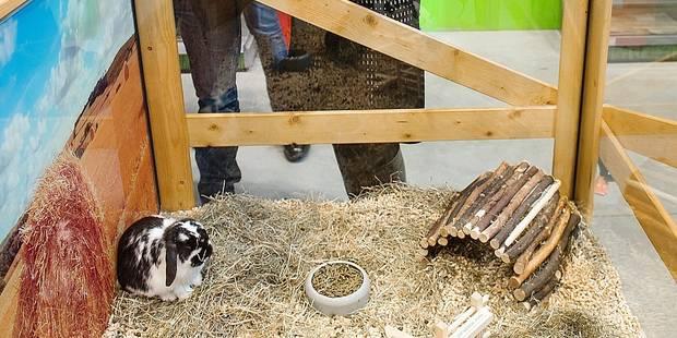 Explosion des plaintes pour maltraitance envers les animaux à Bruxelles - La DH