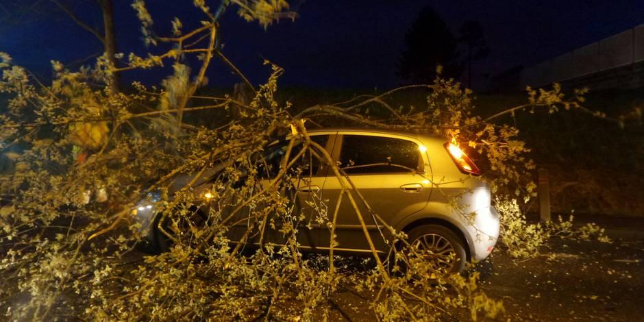 Une conductrice évite de justesse la chute d'un arbre à Trazegnies