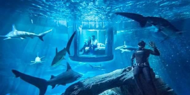Tourisme: une nuit au milieu des requins, cela vous tente ? - La DH