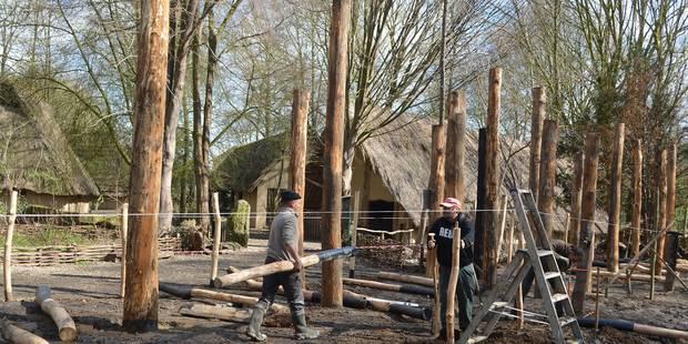 L'archéosite d'Aubechies ouvre sa haute saison - La DH