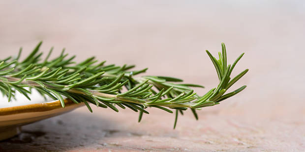 Le romarin, herbe aromatique miraculeuse ? - La DH