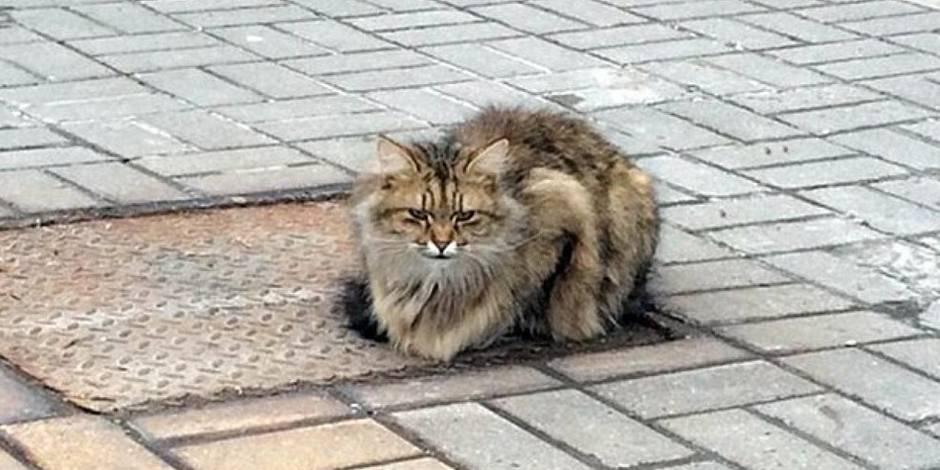 Un chat revient chaque jour à l'endroit où ses maîtres l'ont abandonné