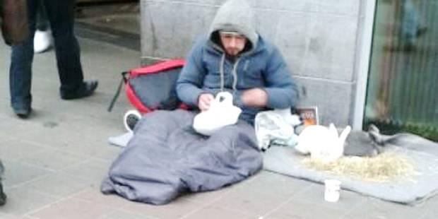 Nouveau phénomène à Bruxelles: des lapins utilisés par des mendiants - La DH