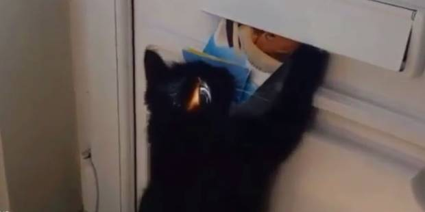 Pas de courrier parce que leur chatte effraie le facteur - La DH