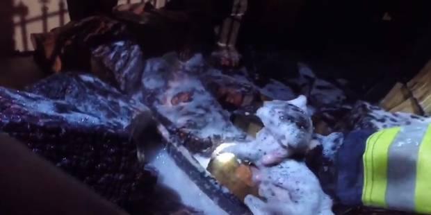 4 chatons sauvés après un incendie (VIDEO) - La DH