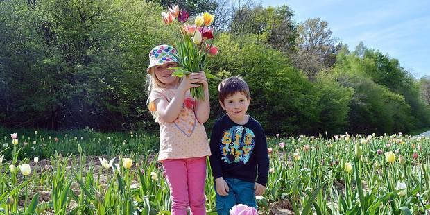 Fleurs à couper : la bonne idée pour la fête des mères - La DH