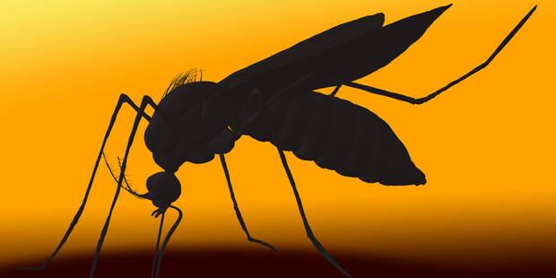 Virus Zika: quelles sont les zones potentiellement à risque en Europe ? - La DH