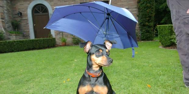 Toujours de la pluie au menu météo des prochains jours - La DH