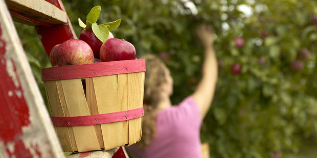 Ne laissez plus pourrir vos fruits, ils peuvent servir ! - La DH