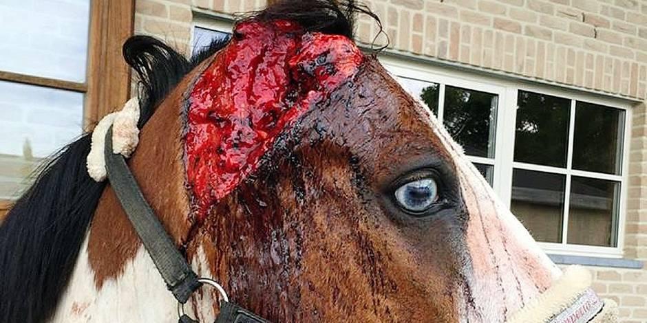 Les plaintes pour maltraitance animale se multiplient