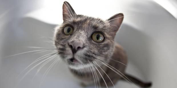Ils retrouvent leur chat disparu depuis 8 ans - La DH