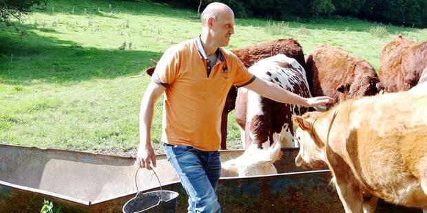 Des vaches élevées à la bière à Chimay - La DH