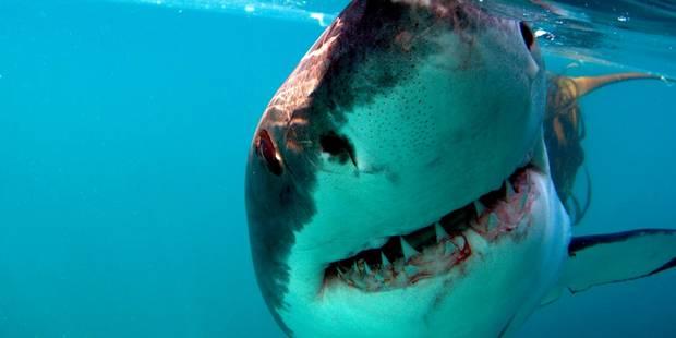 Les humains risquent de causer une extinction sans précédent de grands animaux marins - La DH