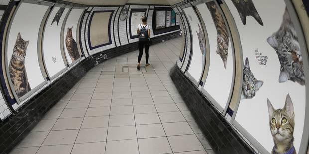 Pourquoi une station de métro est envahie de chats à Londres ? - La DH
